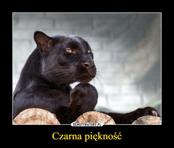 Czarna piękność –